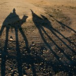 Camel Shadows, Palmyra